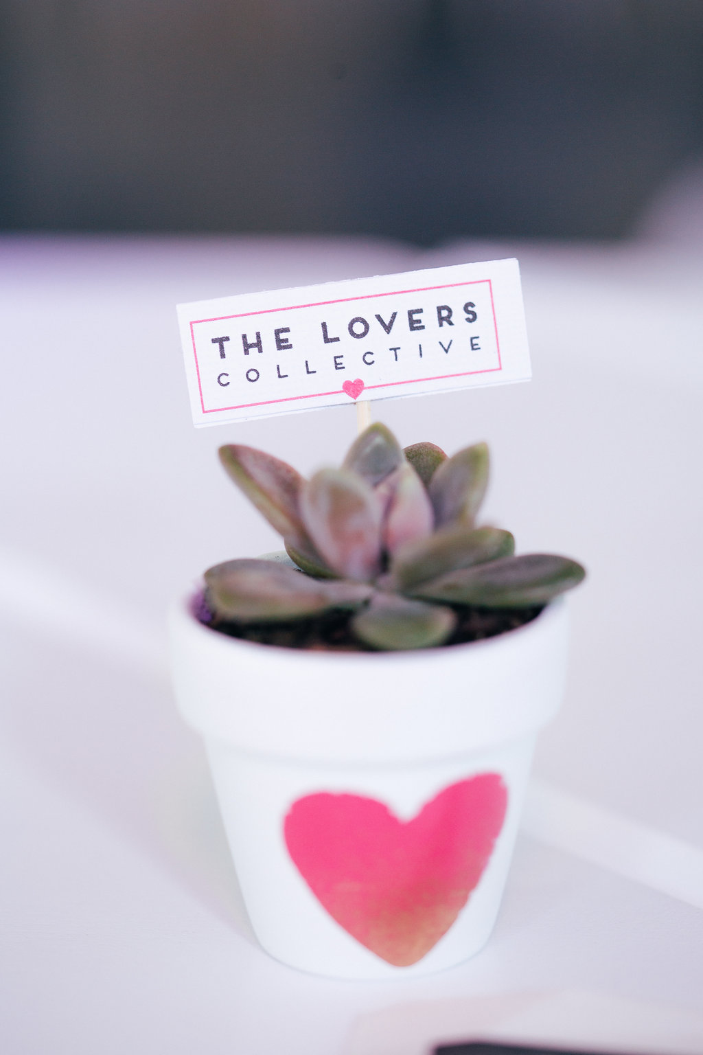 Succulent favour by Fair Light Blessed.  The Lovers Collective Brisbane.